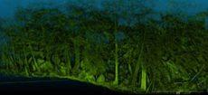 forestal-230x105.jpg